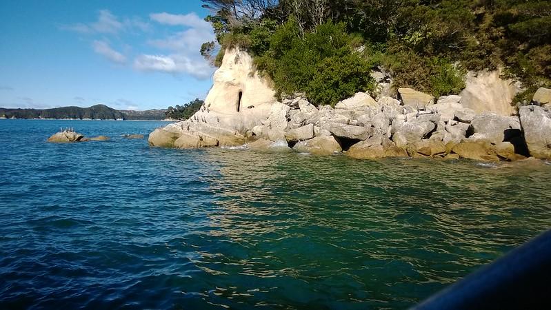 Abel Tasman birds and seals