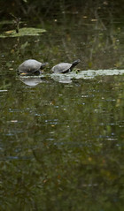 Web-tortues-IMG_6267