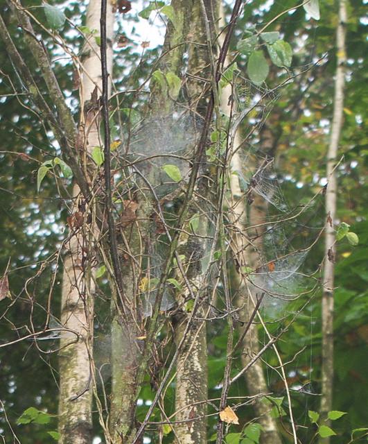 DSC_7226 spider webs