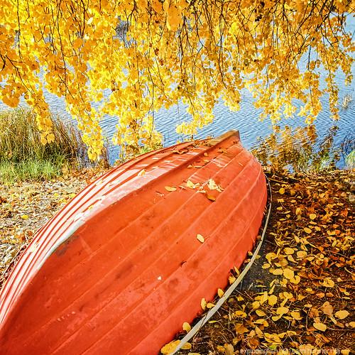 autumn lake tree fall nature water grass leaves finland season landscape outdoors leaf ground nopeople autumncolors rowboat jyväskylä palokkajärvi centralfinland goldenart samsunggalaxys2 jyväskyläsubregion