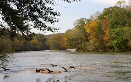 autumn fall colors canon river georgia landscape geese stream t3 shoals chattahoocheeriver canont3