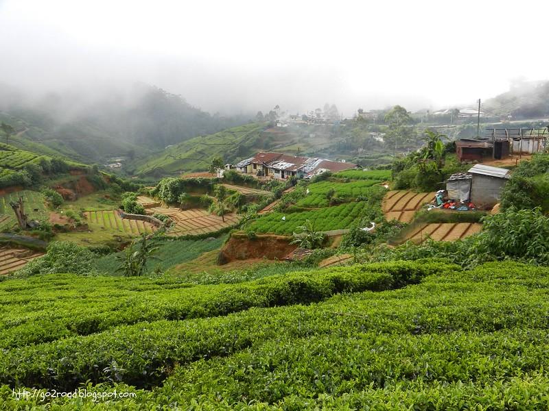 Цейлон, плантации в горах