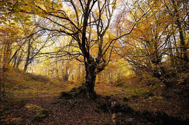 Sunsword & Moonsabre - Tree
