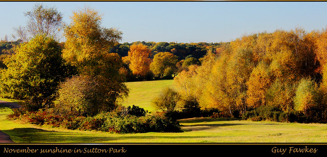 November sunshine in Sutton Park
