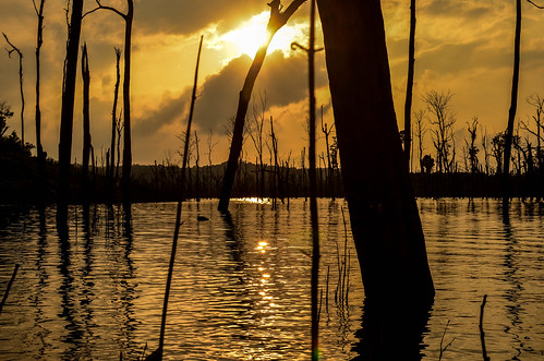 Flooded forest (Somewhere around Thakhek, Laos)