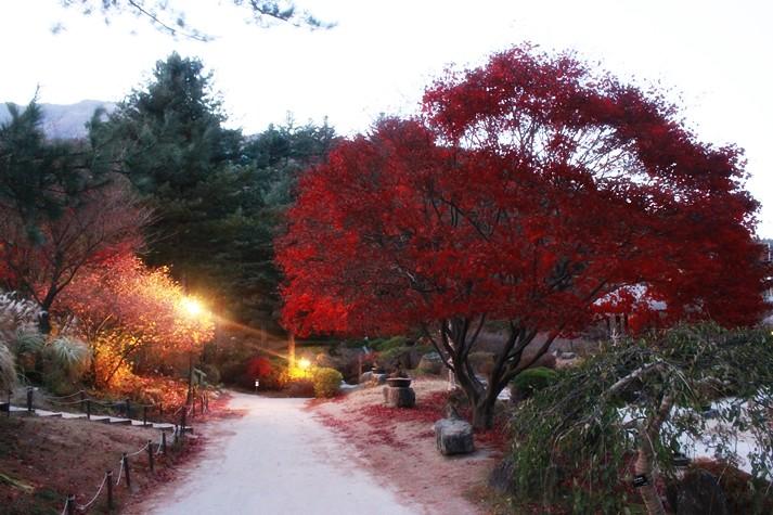 178韓國京畿道晨靜樹木園