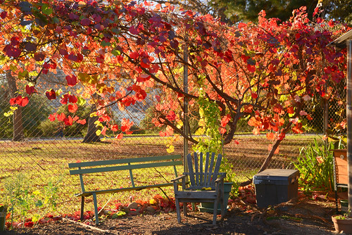 Fall Day in Lake Merritt Gardens, Oakland, California