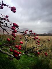 20131129 Scotland-107
