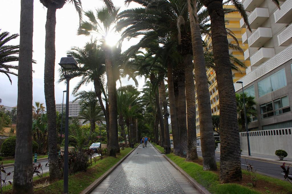 Tenerife 505
