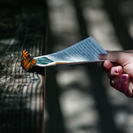 Emily meets a butterfly, Flume Gorge