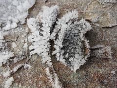 Hoar frost on dead leaves