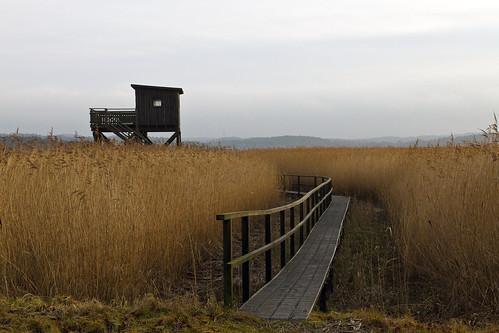 reed reeds sweden sverige birdwatching watchtower kungsbacka canonef24105mmf4lisusm canoneos7d tjölöholm