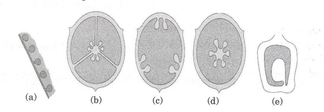 CBSE Sample Paper for Class 11 Biology (Solved) - Set C