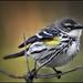 LITTLE BIRD - FOGGY MORNING by photogtom43