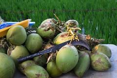 Kokosy przy drodze w Virupappur Gadi