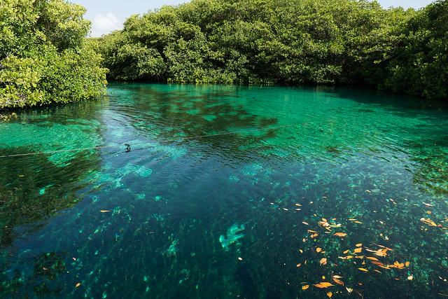 Tulum Casa Cenote blue-2 The Best Cenotes near Tulum and Playa del Carmen, Mexico   Free Cenotes in Mexico   The best Cenotes in Tulum for Divers and Snorkellers   Best cenotes near Playa del Carmen   Best cenotes to dive in   Best cenotes for snorkelling in Mexico