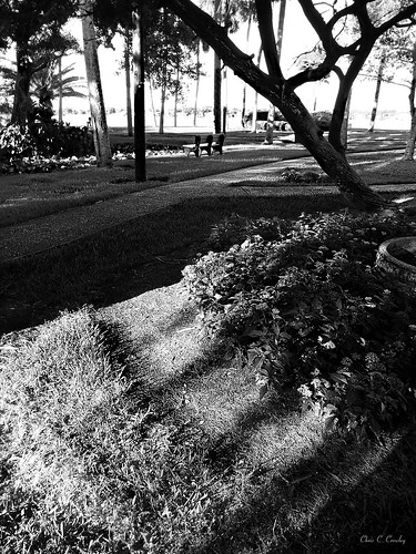 notforgotten amespark ormondbeachflorida shadows light monochrome park trees sidewalks benches garden scenic happybenchmonday landscape