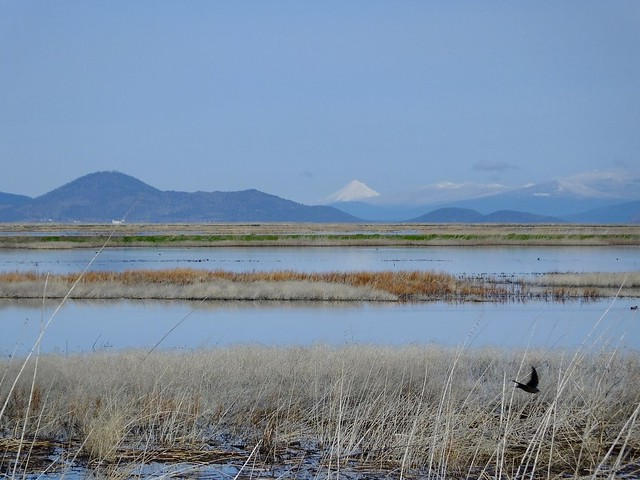 Lower Klamath NWR and Mt. McLoughlin