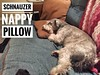 Nappy. #schnauzer #dogsifinstagram #instadog
