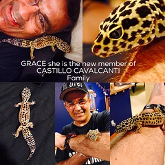 New girl at he house !!!!Grace_the_gecko she is the new member of the Family .Thanks Leanna and JoJo for the surprise I love !!! #sonsofcavalcantidallas #ilovegeckos #iloveanimals #ilovemypet #iloveanimalmorethanpeople