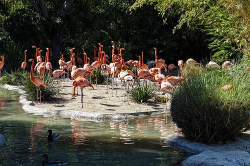 2017-03-13_370   Trip San Diego Zoo California