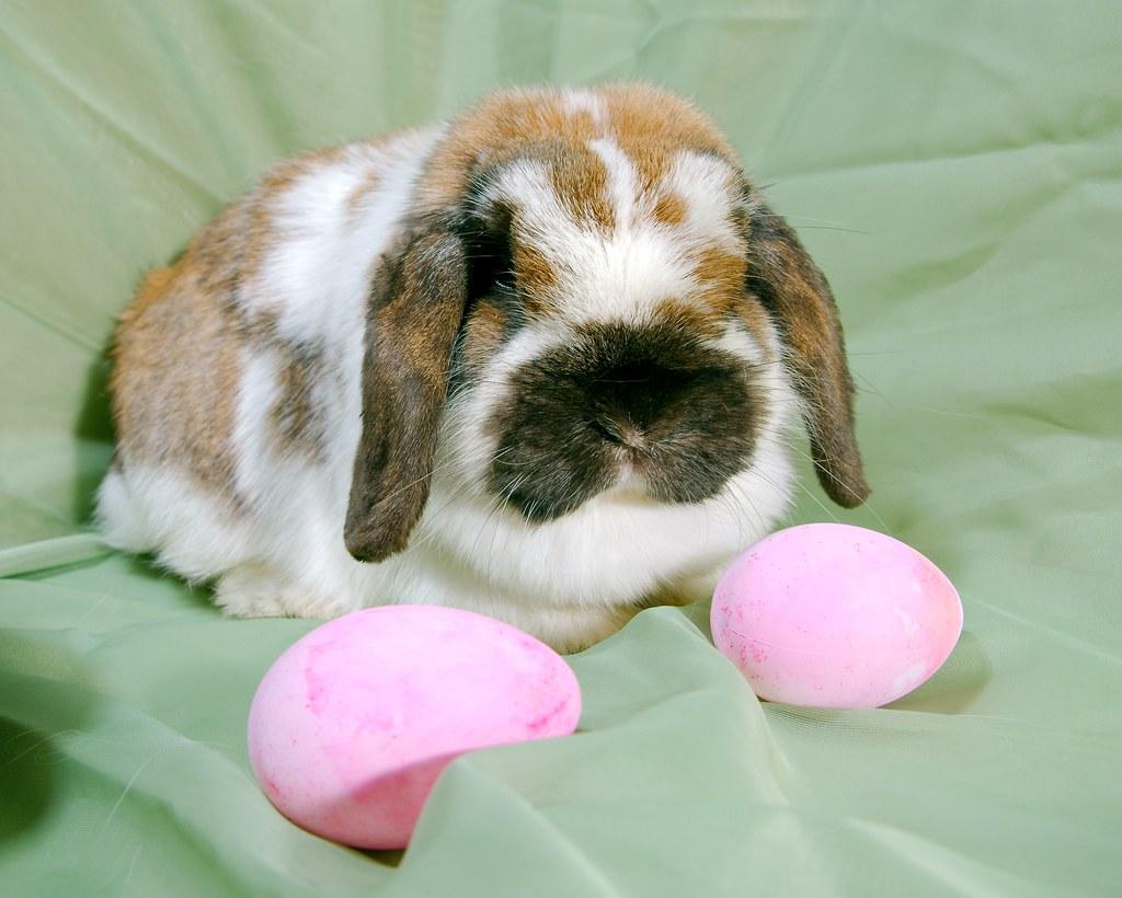 Bunny_20