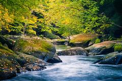Slippery Rock Creek 5