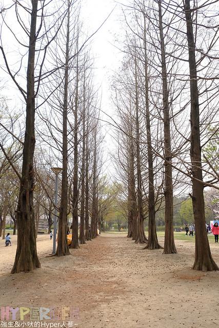 首爾林seoul forest (6)