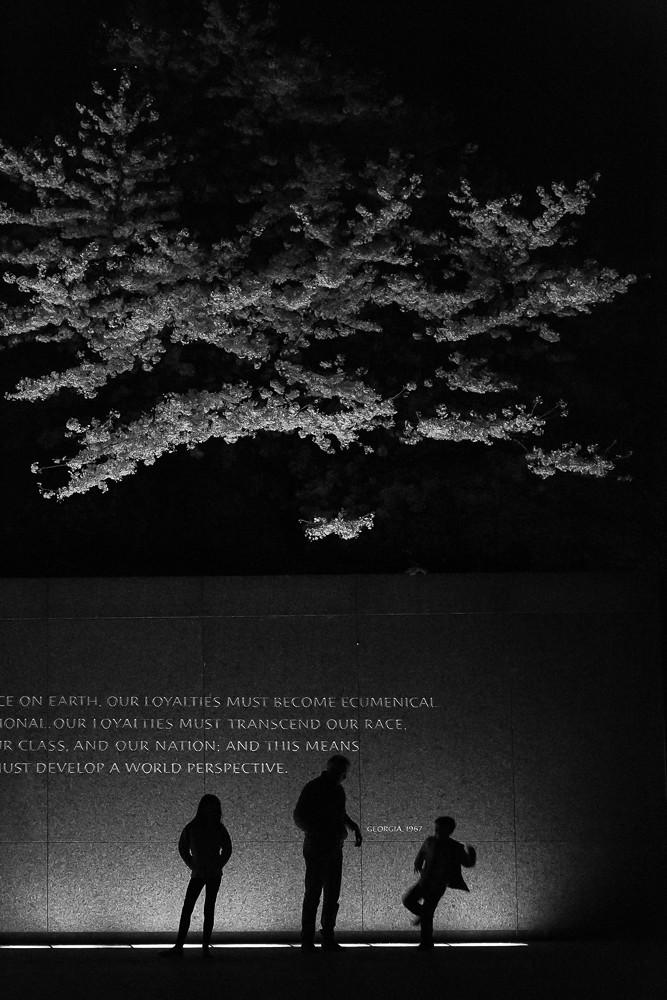 2017 华盛顿樱花-21