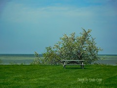Striped water & flowering trees - Lake Erie Bluffs