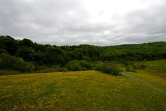 Grangelands and Pulpit Hill Nature Reserves
