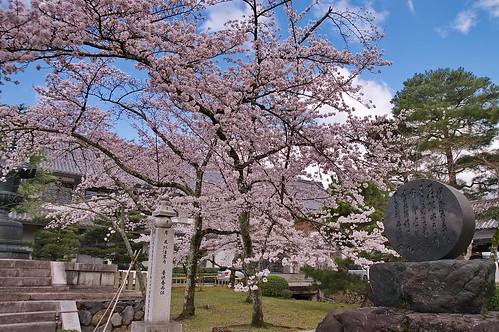 【写真】2013 桜 : 大覚寺/2020-09-15/IMGP9409