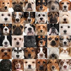 狗从何时从狼里被驯化出来?研究者们都快打起来了!