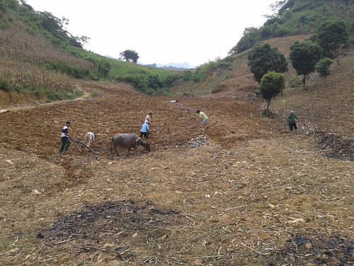 Ploughing, fertilizing and sowing maize field in Northwest Vietnam