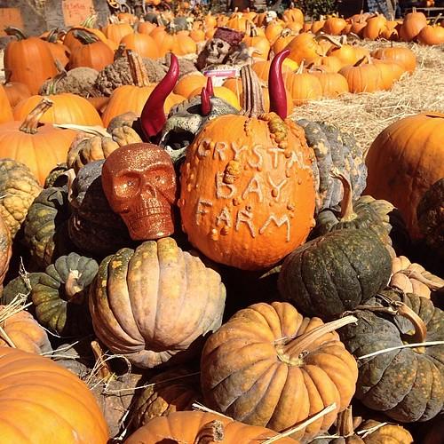 Pumpkin patch time.