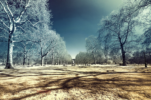 [EXPLORE] Green Park, London, United Kingdom (Infrared Photography)