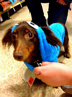 Baxter in a Cookie Monster costume