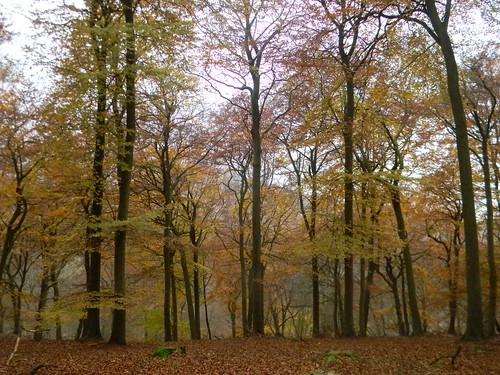 Autumn colour 3