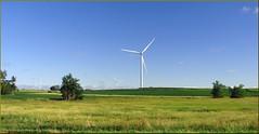 Windfarms, Northwest IA 7-26-13
