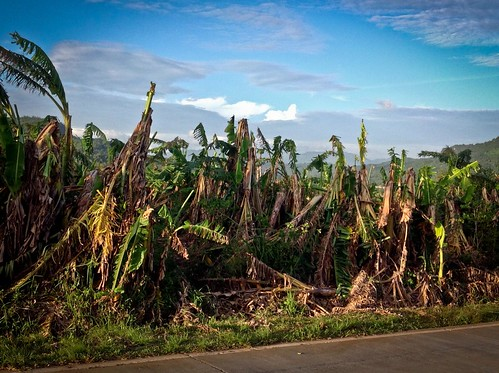 Assessing damages to agriculture after typhoon Haiyan - Philippines
