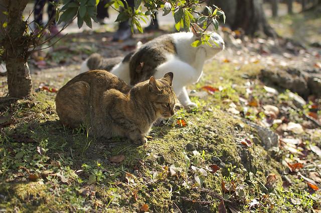 哲学の道で哲学する猫 その6