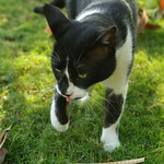 Image of cattongue from Flickr