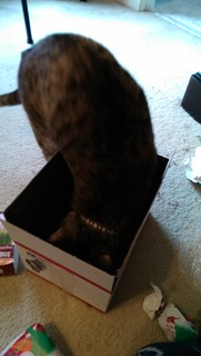 Maggie inspecting the box