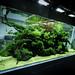 ADA Nature Aquarium Gallery by viktorlantos