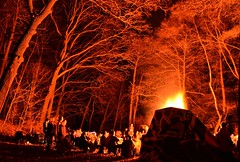 tree, evening, fire, darkness, night, campfire, bonfire,