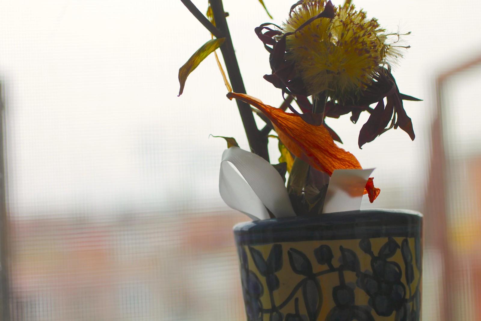 Flowers on my window sill