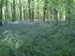 Bluebell Wood flashfiction stories