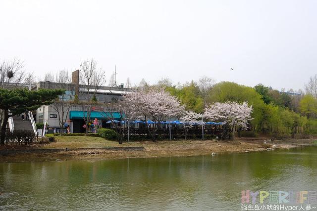 首爾林seoul forest (15)