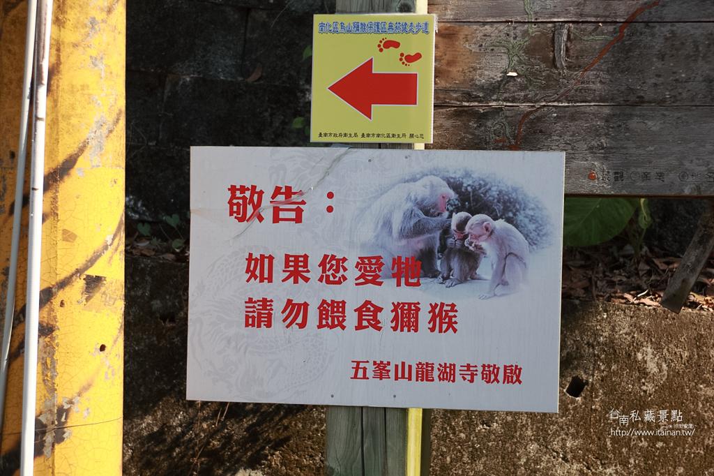 台灣獼猴 (5)