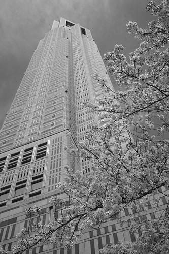 Cherry blossom & Tokyo Metropolitan government
